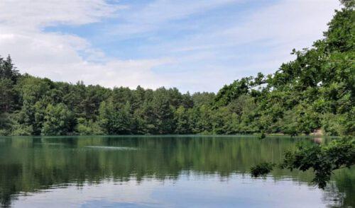 Artikelbild zu Artikel Wanderung am Sonntag, den 28. Juni 2020 im Gebiet Waldsee Neuenwege/Forst Herrenneuen