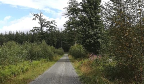 Artikelbild zu Artikel Wanderung am Sonntag, den 23.August 2020 im Gebiet Upjever Forst, Reepsholt, Abickhafe mit Reimer Klappstein